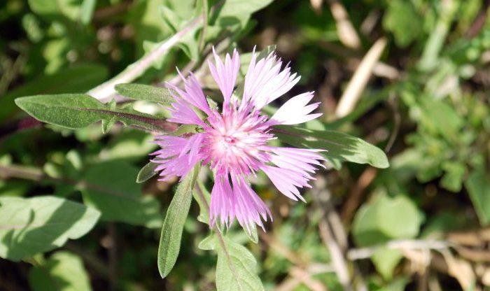Flores en Olivar