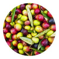 variedades españolas de aceitunas