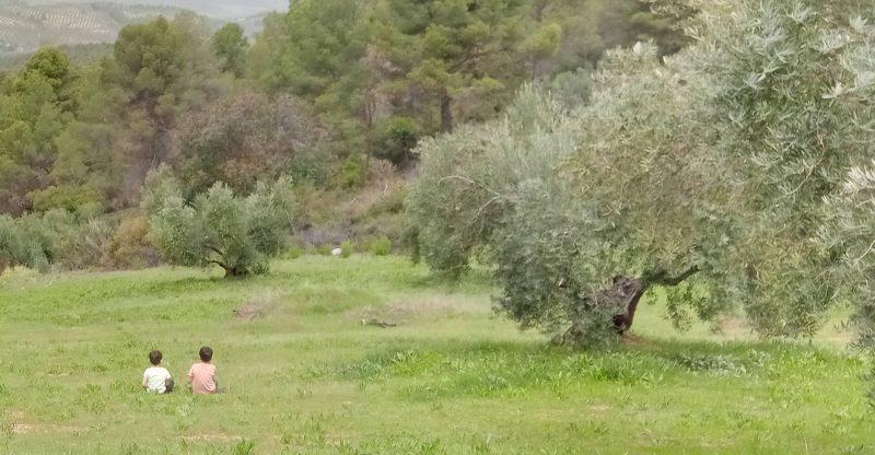 Olivar Ecológico Sierra de Segura
